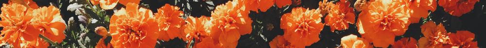 flowers-short-orange