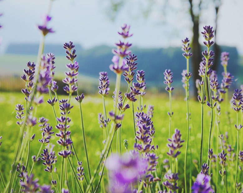aromatherapy-essential-oils-rheumatoid-arthritis-ra-cover