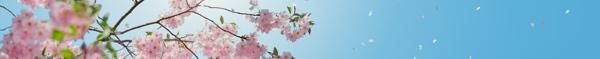 aromatherapy-essential-oils-rheumatoid-arthritis-ra-divider4
